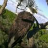 Amerika- Florida- State Park -Kartal Yuvası Canlı izle