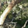 Amerika- Florida- State Park -2- Kartal Yuvası Canlı izle